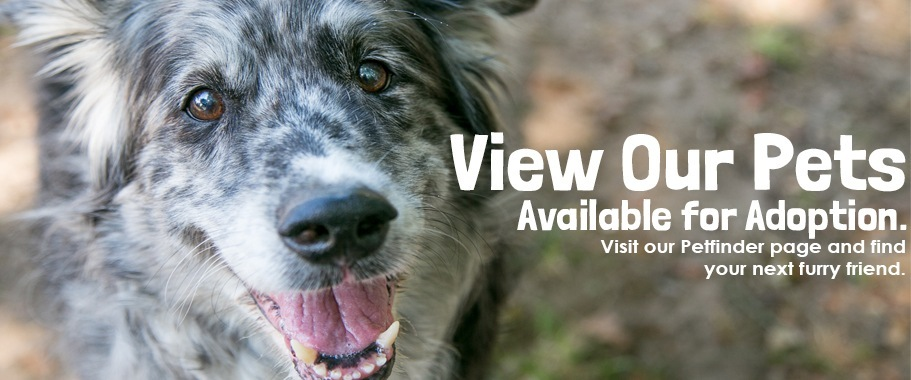 View Our Petfinder Page